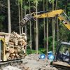 薪の伐採現場